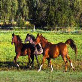 Verbied paardenvlees van buiten de EU