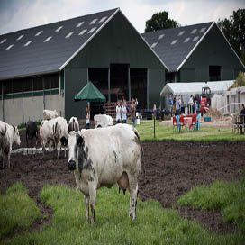 Boer zet Weivlees op de kaart