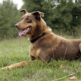 Duitse slager verkoopt alleen vlees voor honden