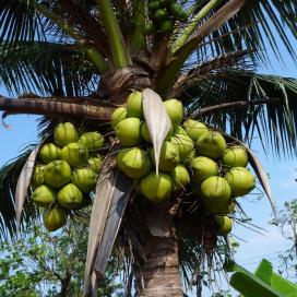 OnOff Spices! komt met biologische Thaise kokosroom