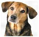 Pools stel maakt reuzel van honden
