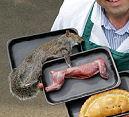 Commotie om eekhoornvlees