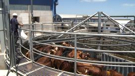 Lange houdbaarheid PUL rundvlees