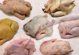 Europarlementariër stelt vragen over besmet kippenvlees