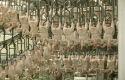 Franse kippenvleessector verdacht van prijsafspraken