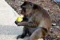 Ook apen eten liever warm