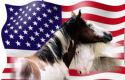 Cavel vangt bot over paardenslacht VS