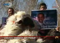 Turken slachten schapen voor Obama (filmpje)