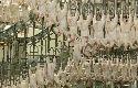 Meer salmonella bij grote kippenslachters