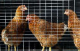 Attachment 001 food image vls7552i01 80x51