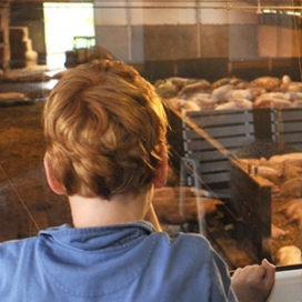 NVV opent meldpunt 'Valse Lesstof' over landbouw
