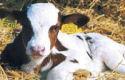 Attachment 003 food image vls5529i03