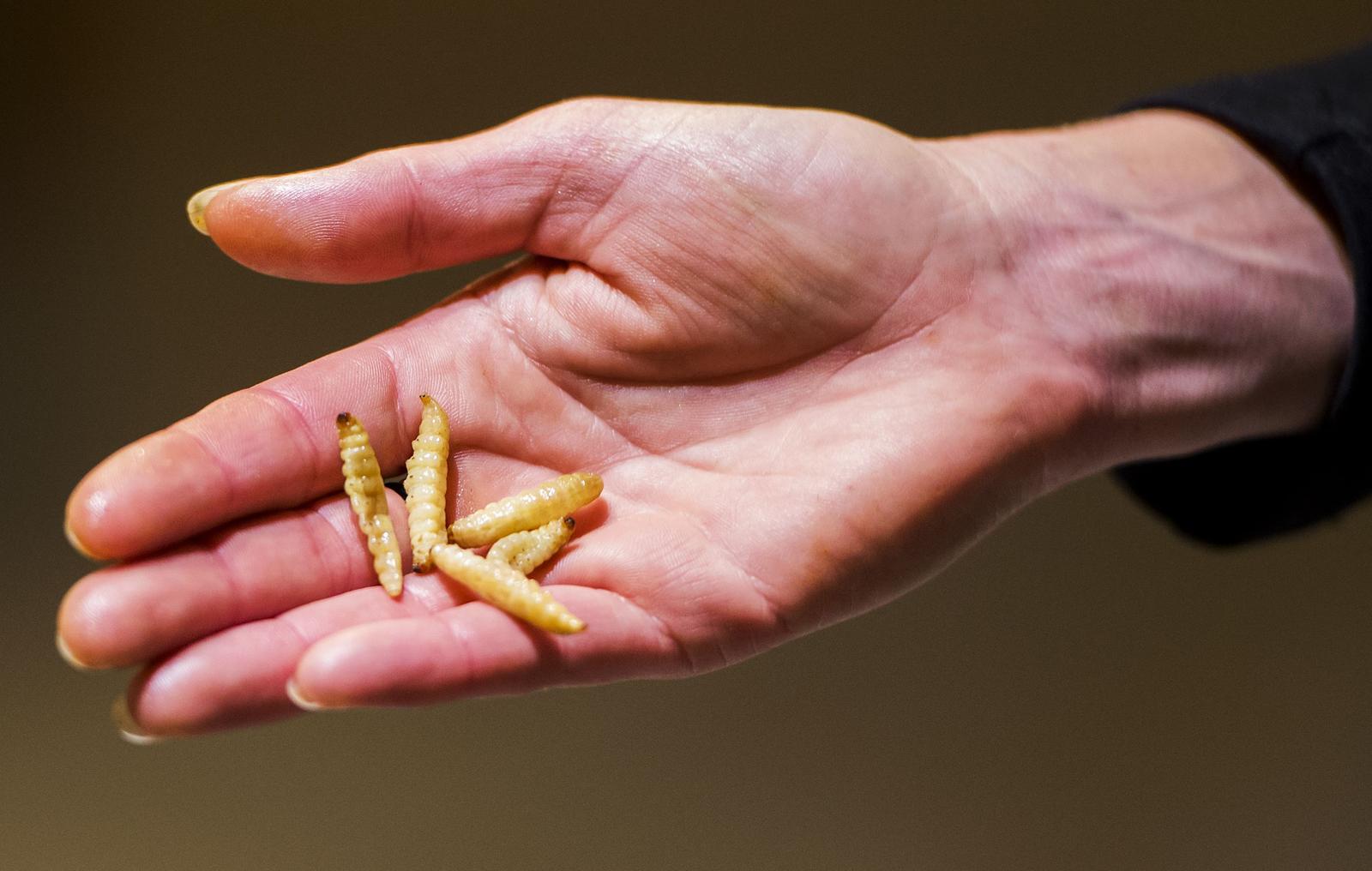 Fotoreportage: insecten eten bij Jumbo