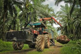 Eindsprint overstap op verantwoorde palmolie nodig
