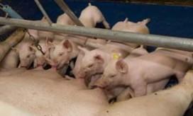 'VGO-onderzoek mag niet dienen voor rem op verduurzaming varkenshouderij'
