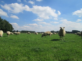 Hollands Lamsvleesseizoen 2016 is geopend