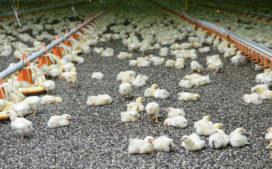 Oekraïense kippenvleesproducent MHP opent vestiging in Veenendaal