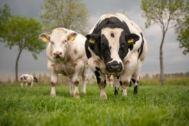Checklist: dit moet een slager weten over zijn inkoop