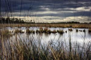 Natuurgebied de Peel