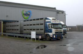 Vion introduceert nieuwe vraaggestuurde aanpak varkenshouderij