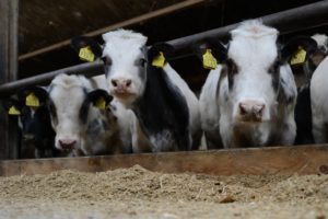 Joviander: nieuw vlees van eigen bodem