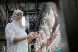 NVWA wil meer aandacht dierenwelzijn bij pluimveeslacht