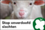 PvdD poogt onverdoofd slachten te verbieden